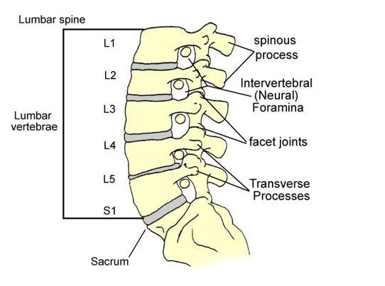 l4 nerve pain diagram elec wiring lumbar spondylosis - physiopedia