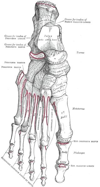 feet diagram