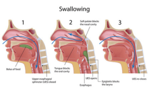 Feeding and the Swallow Mechanism  Physiopedia