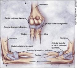 Elbow Ligamentous Injuries - Physiopedia
