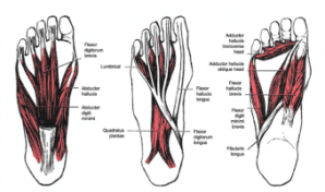 Calcaneal Spurs  Physiopedia