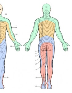 Inng also thoracic radiculopathy physiopedia rh physio pedia
