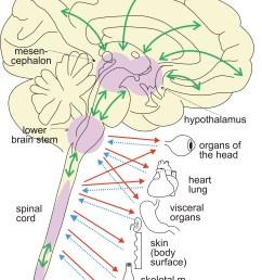 2 ans brain regul ns fig15 2013 jpg [ 3697 x 5555 Pixel ]