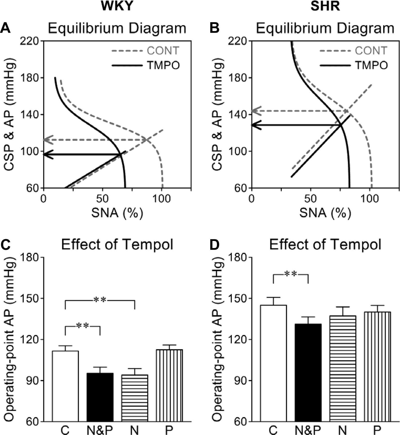 Effects Of Tempol On Baroreflex Neural Arc Versus