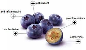 Le bleuet et ses anthocyanes