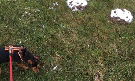 Schnee auf Feld und Acker