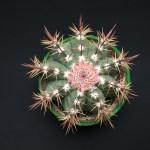 Mathe nach Zahlen: 🌵 Kaktus