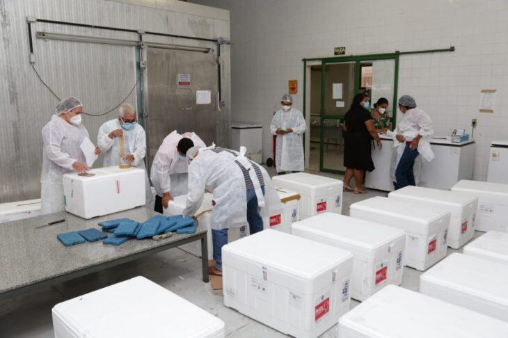 rede de frios coronavac 1 Governo distribuirá vacinas via terrestre e aérea para cidades do interior do Piauí