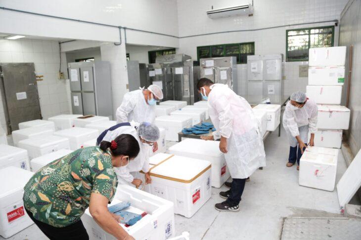 rede de frios coronavac 14 Governo distribuirá vacinas via terrestre e aérea para cidades do interior do Piauí