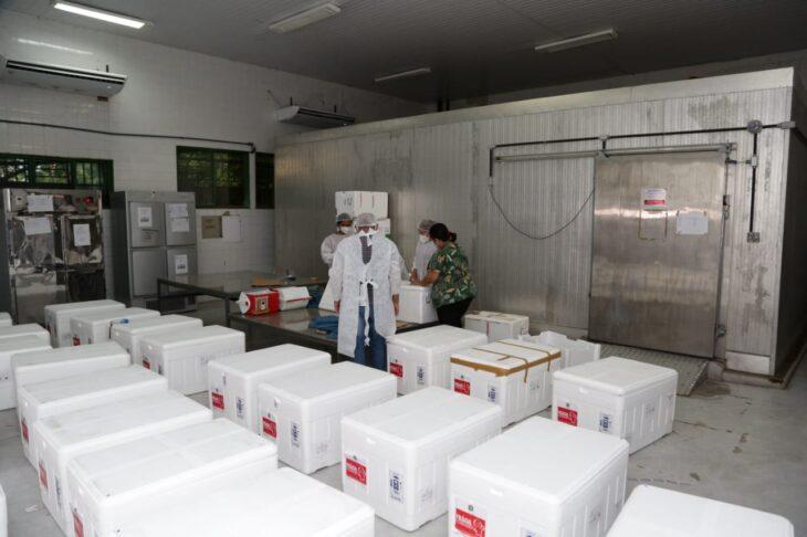 rede de frios coronavac 9 Governo distribuirá vacinas via terrestre e aérea para cidades do interior do Piauí
