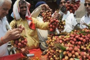 170201135050-india-lychee-exlarge-169-300x225
