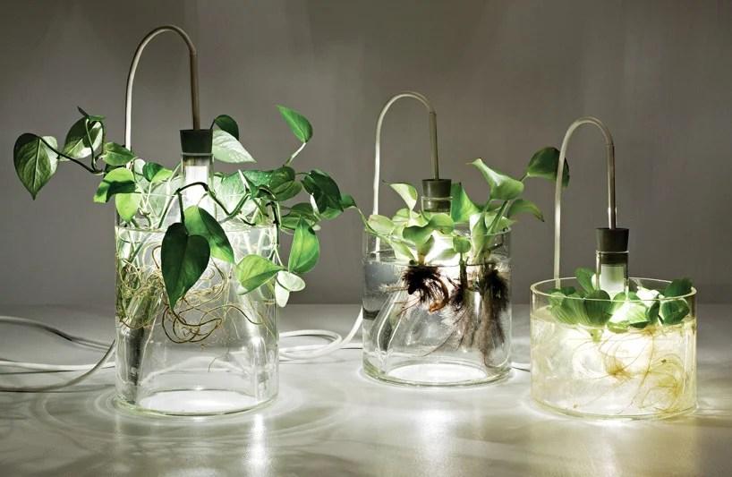 Vasi con fiori e piante acquatiche