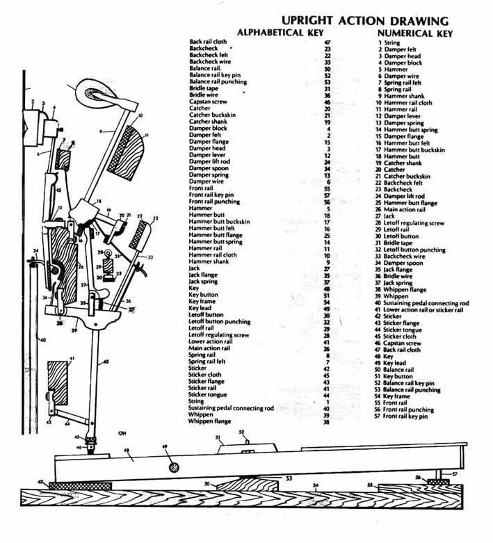 Baby Grand Piano Parts Diagram, Baby, Free Engine Image
