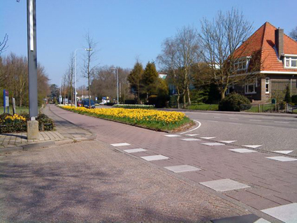 Daffodils outside the church in Bennebroek, Netherlands