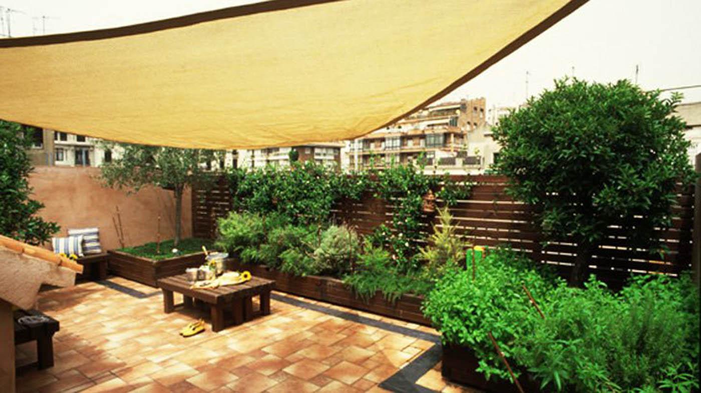 Terrazza piante per terrazze  Piante per