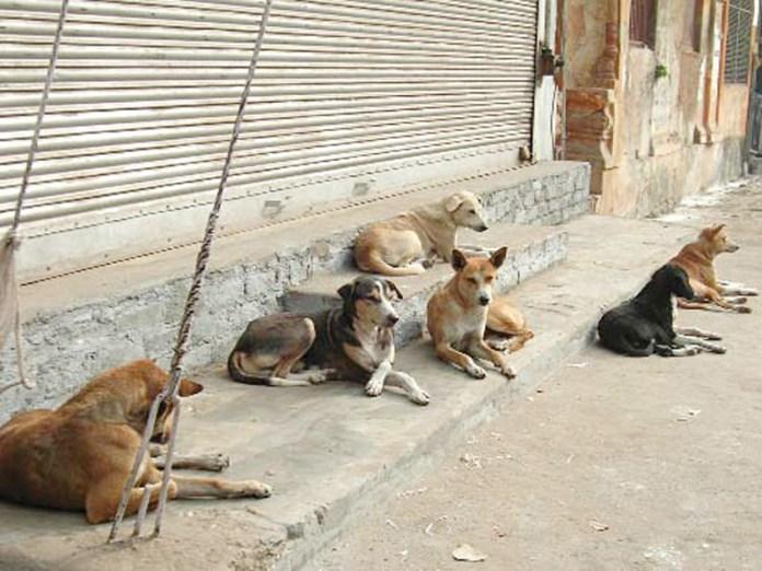 Cani randagi (foto d'archivio)