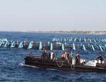 Ingrid Muccitelli su battellino di maricoltura Reho raggiunge la fabbrica del pesce di Torre Suda