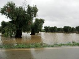 strada provinciale Alezio - Taviano. Foto di redazione
