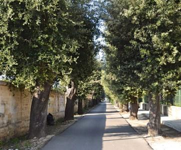 Il viale del cimitero di Alezio