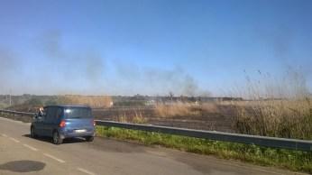 incendio li foggi (11)