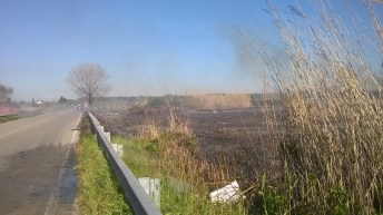 incendio li foggi (7)