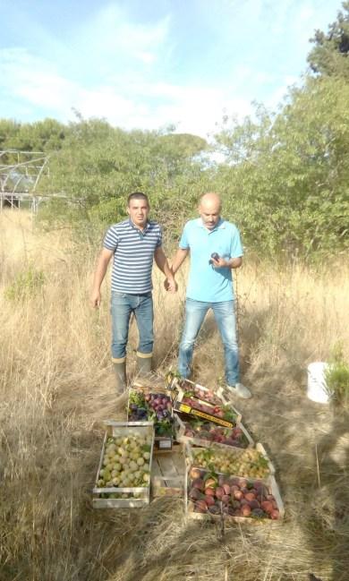 Raccolta frutti ex Agrario