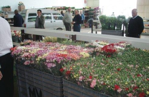 Il mercato floricolo
