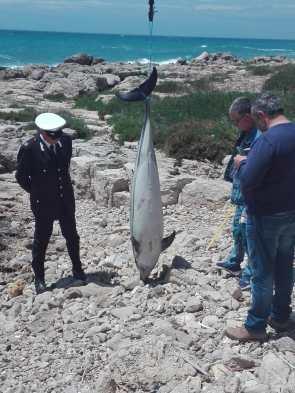 Delfino spiaggiato Alliste