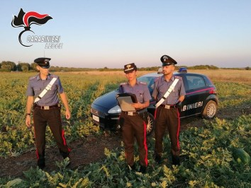 Nardò, i carabinieri nei campi di raccolta