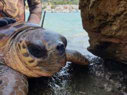 La tartaruga recuperata