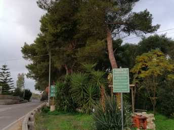 La pineta di Supersano
