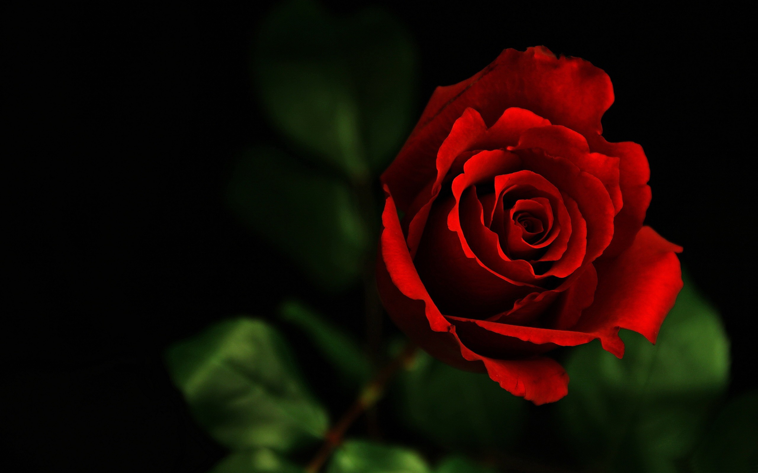 red roses tumblr background