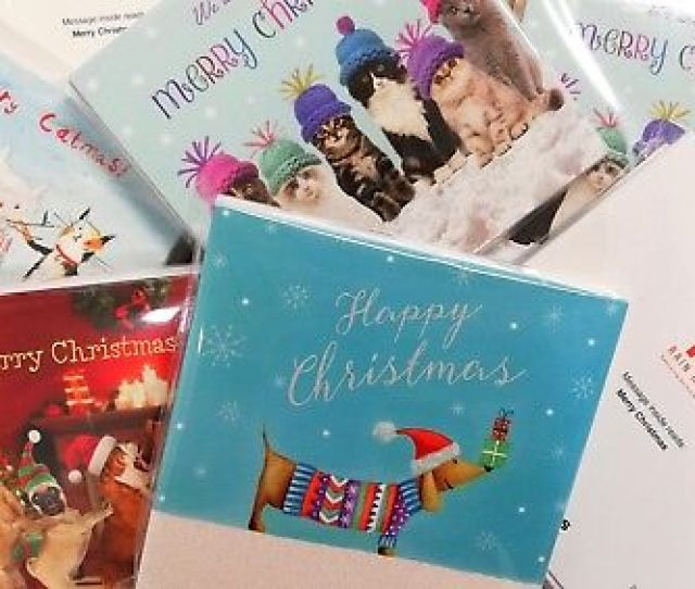 On Sale Rain Rescue Charity Cat And Dog Christmas Cards