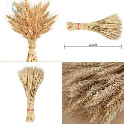 golden dried wheat sheaves