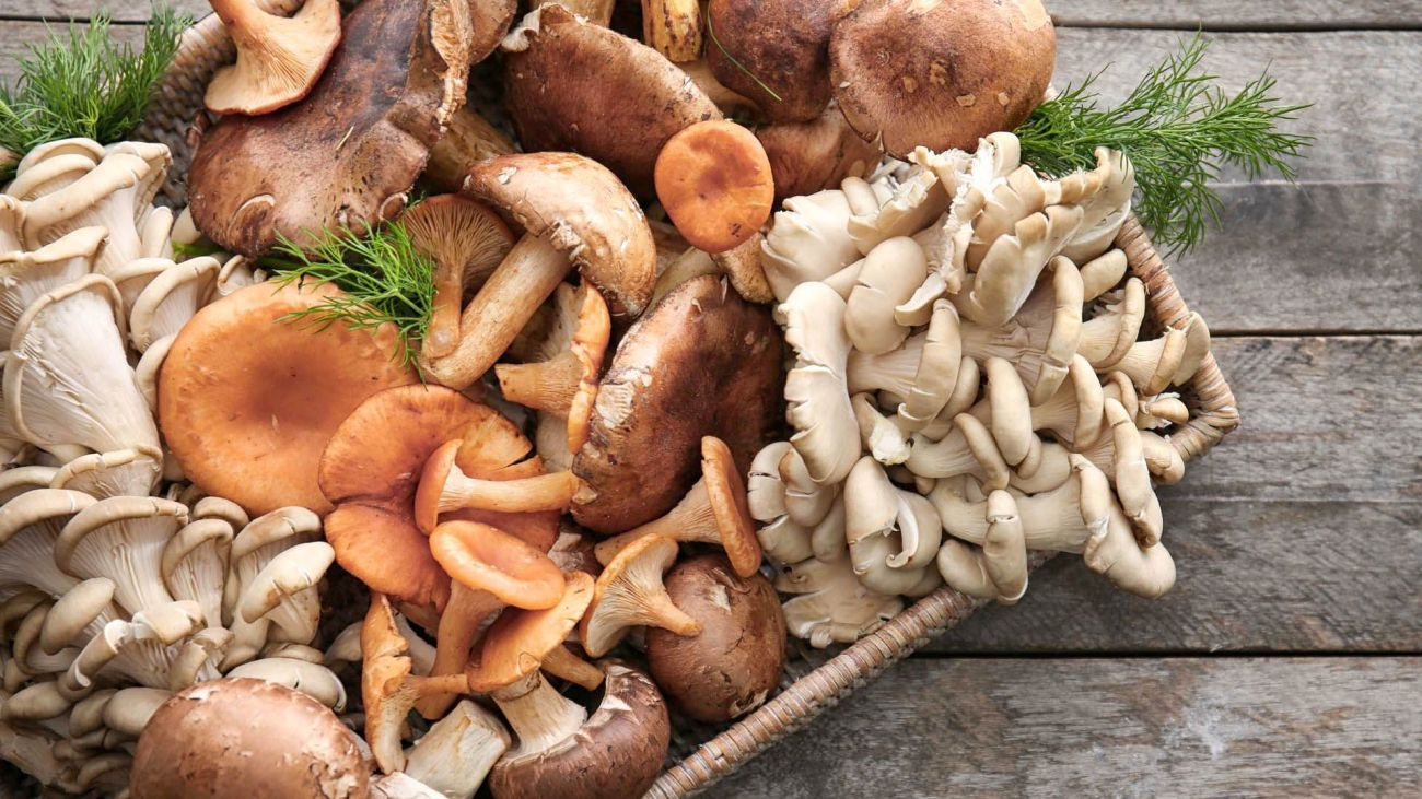Funghi mon amour