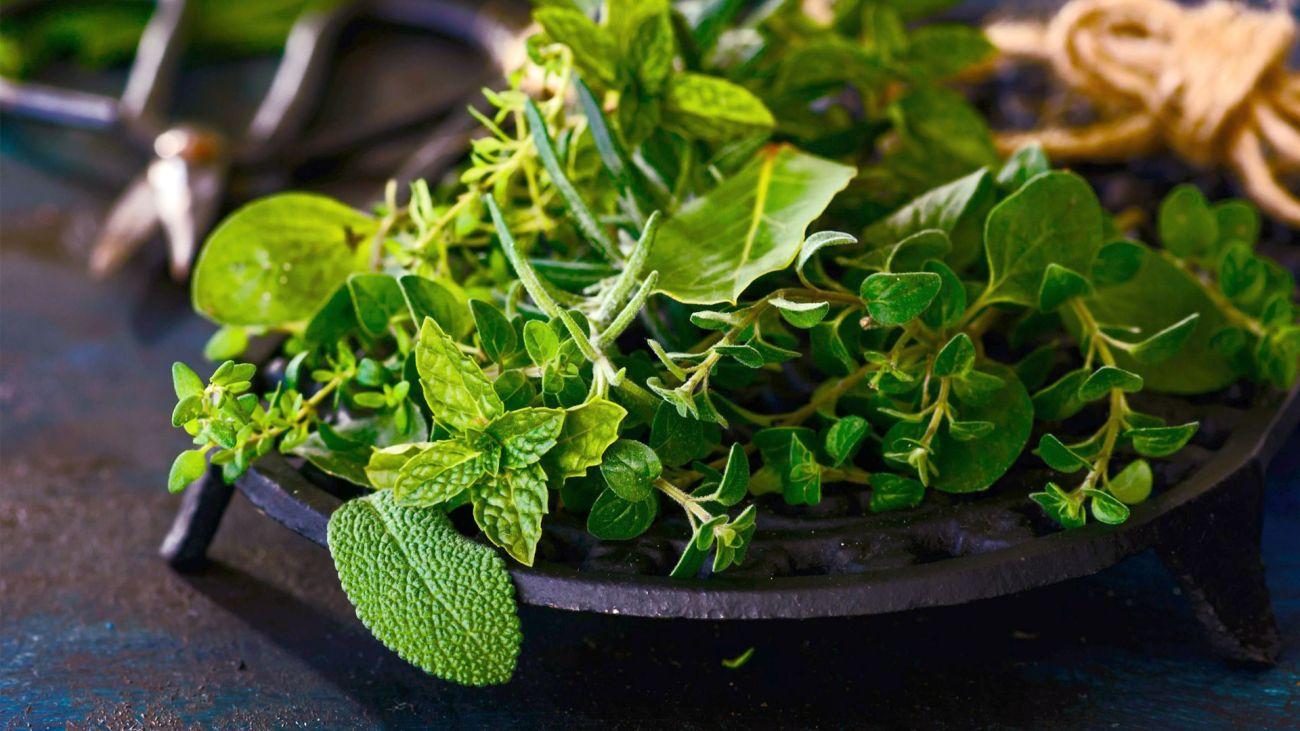 Erbe e piante aromatiche vol 2