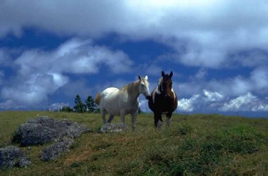 Foto:duecavalli