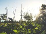 gusto contadino agricoltura orto