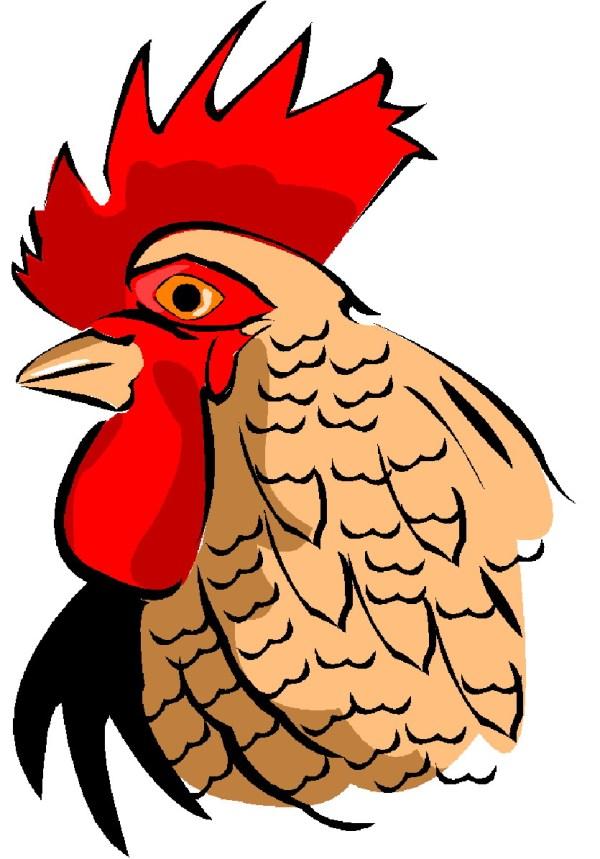 clip art - chickens 564035