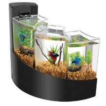 Fish Aquarium Shops In Nagpur Dealers