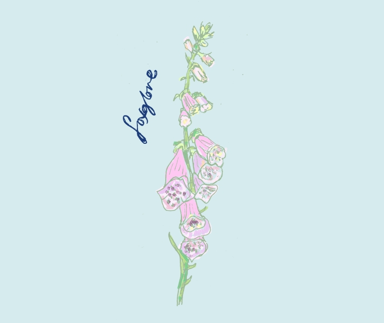 British Flowers Week June 2016 Pickle Design's illustration of a Foxglove