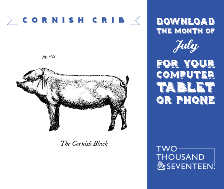 Our illustration of the Cornish Black Pig for the July 2017 Calendar