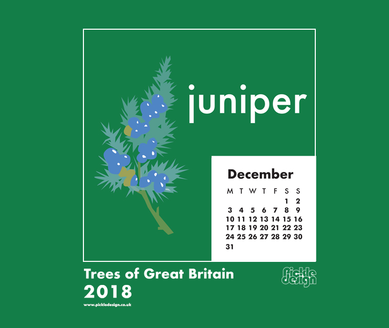 Download our December Great British Trees calendar of the Juniper tree for free for your mobile, tablet and desktop computer background.