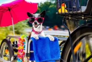 Best Dog Bike Trailer: Buying the Right Dog Bike Trailer for Your Pet