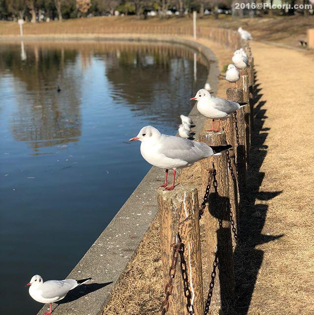 散歩〜今日は暖かい。