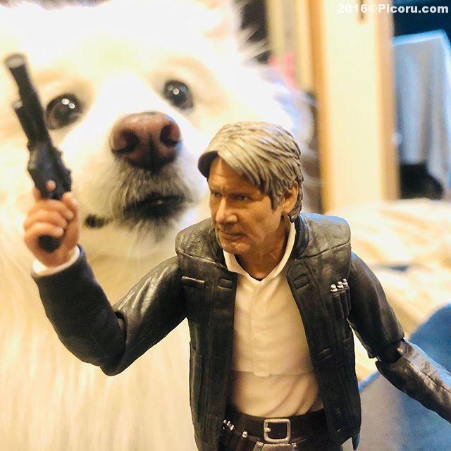 ハンソロと白い犬^_^#ハンソロが好き #ハンソロ