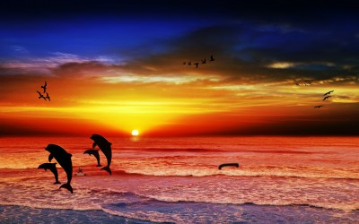 sunset with delphis and birds by XxBA666xX