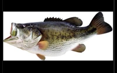 Sticker – Fisch #1 –