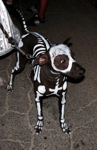 Dog skeleton costume - Really funny pictures collection on ...