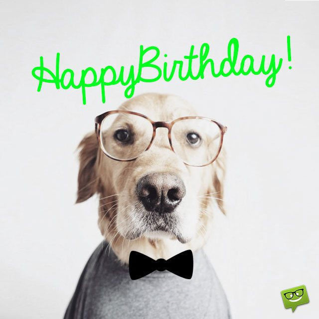 Dog Funny Happy Birthday